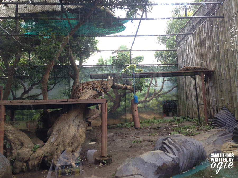 Jatim Park Batu Secret Zoo