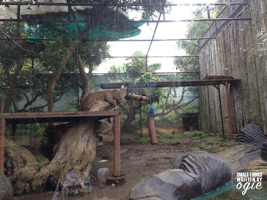 Jatim Park Batu Secret Zoo