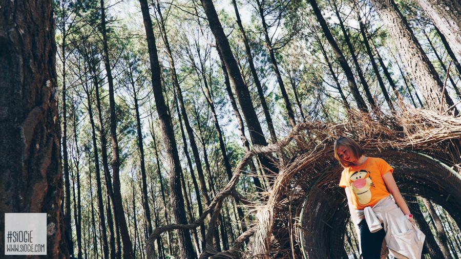 hutan pinus pengger mangunan imogiri